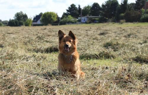 Hund in Schweden @Reiseidylle