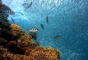 Reef Tauchen